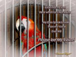 Parrot quote