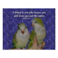 Parrot quote #1