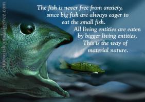 Small Fish quote #2