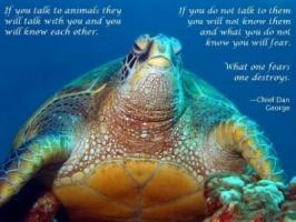 Turtle quote #4