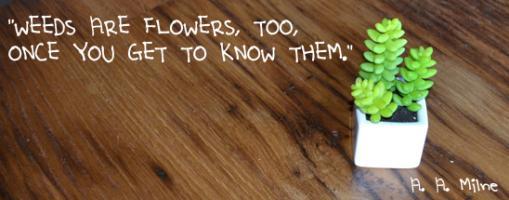 Weeds quote #2