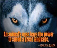 Wild Animals quote #2